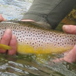 Hunting Browns on the Owyhee